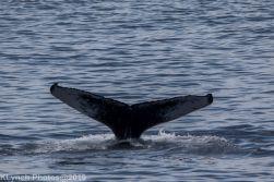 WhaleA_7