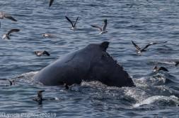 WhaleA_70