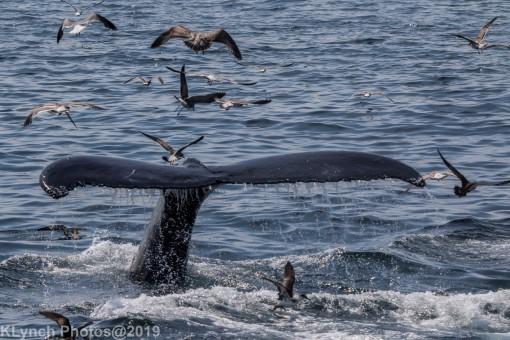 WhaleA_74