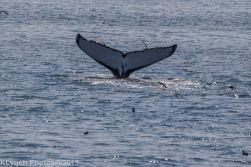 WhaleA_89
