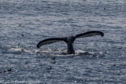 WhaleA_90