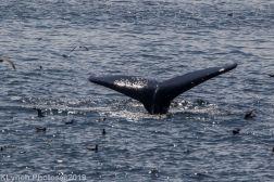 WhaleA_93
