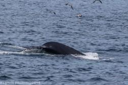 WhaleB_24