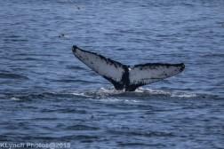 WhaleB_27