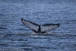 WhaleB_28