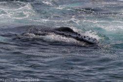 WhaleB_3