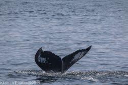 WhaleB_34