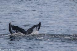 WhaleB_35