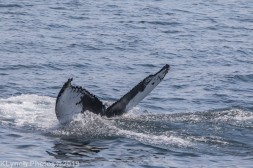 WhaleB_37