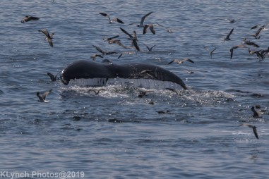 WhaleB_42