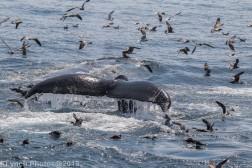 WhaleB_56