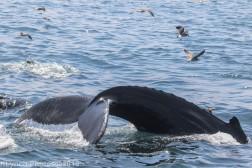WhaleB_6
