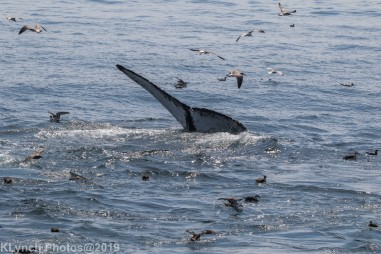 WhaleB_65