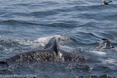 WhaleB_86