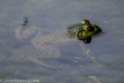 Frogs_5