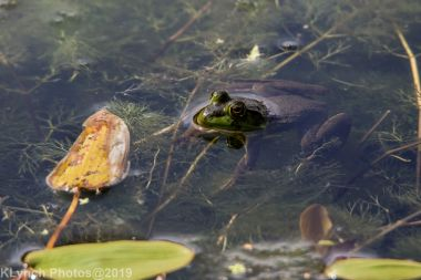 Frogs_6
