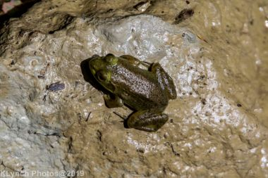 Frogs_7