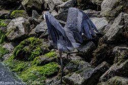 Heron_6