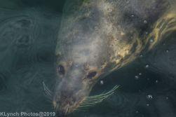 Seals_101