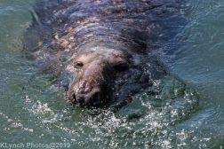 Seals_102