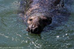 Seals_103