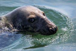Seals_104