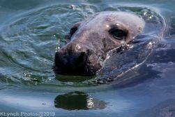 Seals_105