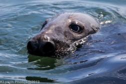 Seals_106