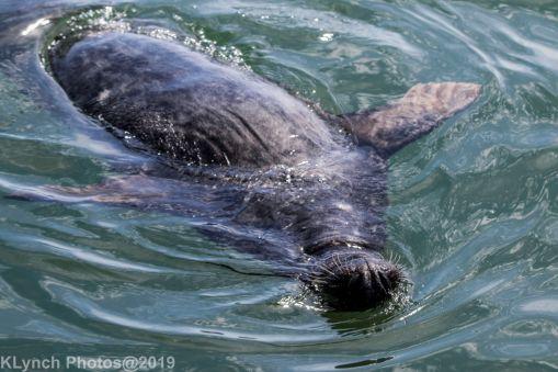 Seals_107