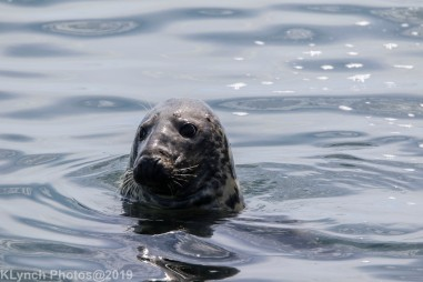 Seals_109