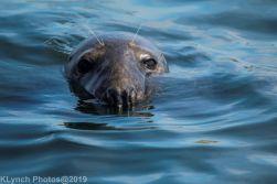 Seals_111