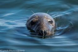 Seals_112