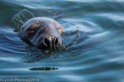 Seals_113