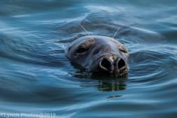 Seals_114
