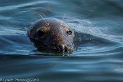 Seals_115