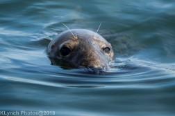 Seals_116