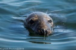 Seals_117
