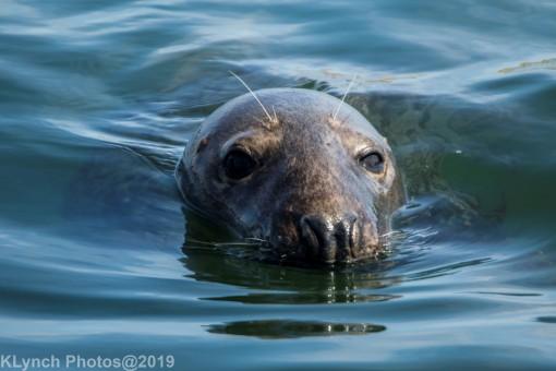 Seals_118