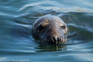 Seals_119