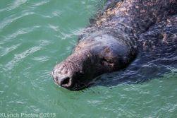 Seals_12