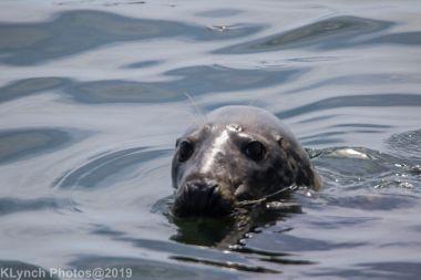 Seals_120