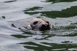 Seals_123