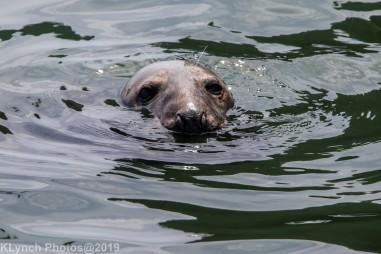 Seals_124