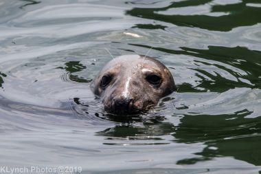 Seals_125