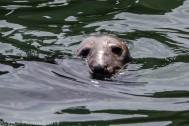 Seals_126