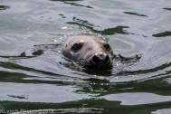 Seals_127