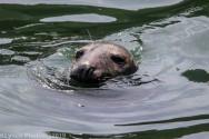 Seals_128