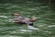 Seals_129