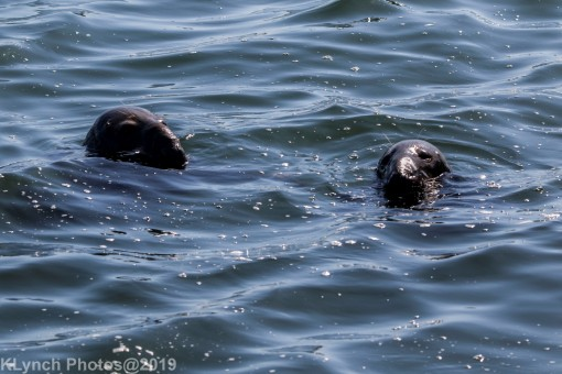 Seals_19