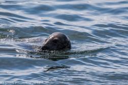 Seals_2